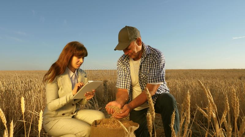 Farmers and business woman teamwork in field. agronomist and farmer are holding a grain of wheat in their hands. Farmers and business women teamwork in field royalty free stock photography