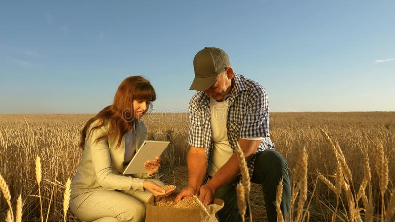 Farmers and business woman teamwork in field. agronomist and farmer are holding a grain of wheat in their hands. Farmers and business women teamwork in field stock photography
