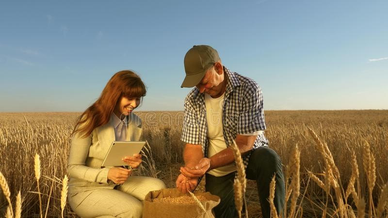 Farmers and business woman teamwork in field. agronomist and farmer are holding a grain of wheat in their hands. Farmers and business women teamwork in field royalty free stock photo
