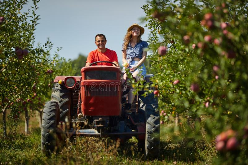Farmers couple driving tractor. Farmers couple driving the tractor through apples orchard royalty free stock photos
