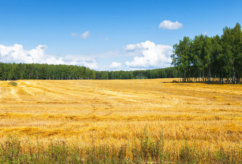Farmers field. Beveled Farm Field full of hay bales royalty free stock photography