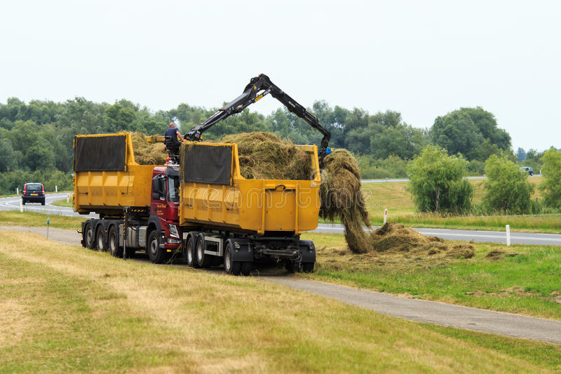 Gathering hay along Dutch road, Duurse Waarden stock image