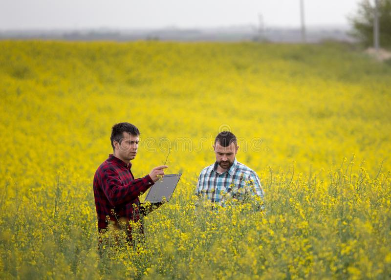 Farmers with laptop in rapessed field royalty free stock photo