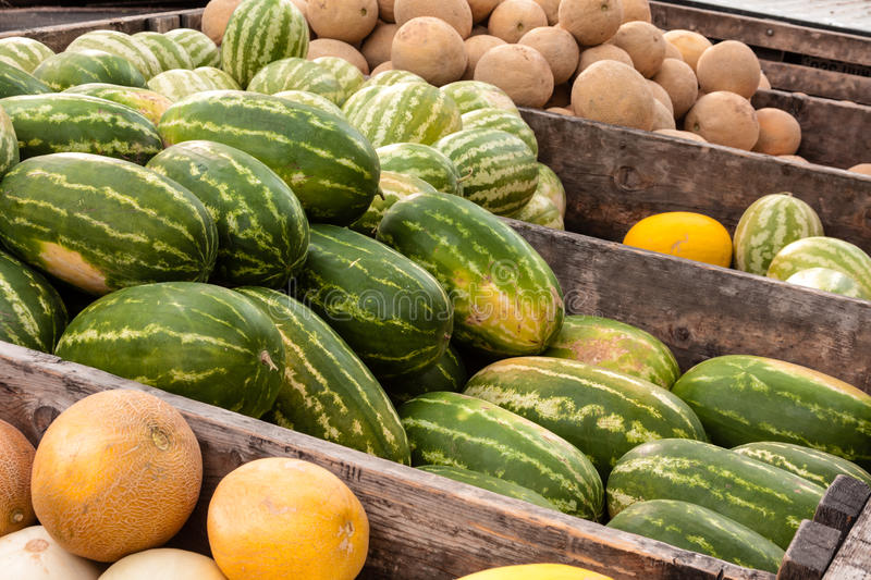 22 Casaba Melons Photos Free Royalty Free Stock Photos From Dreamstime