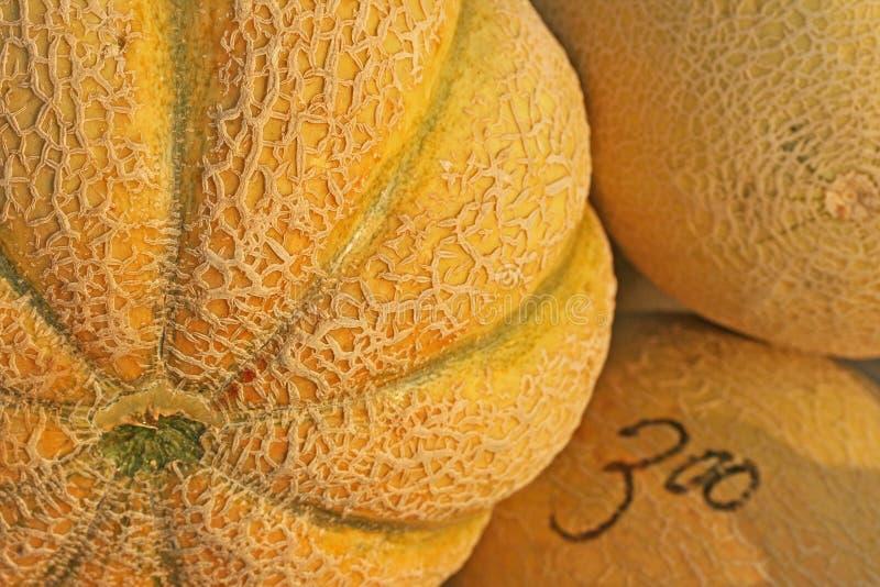 Farmers Market Cantaloupe stock image
