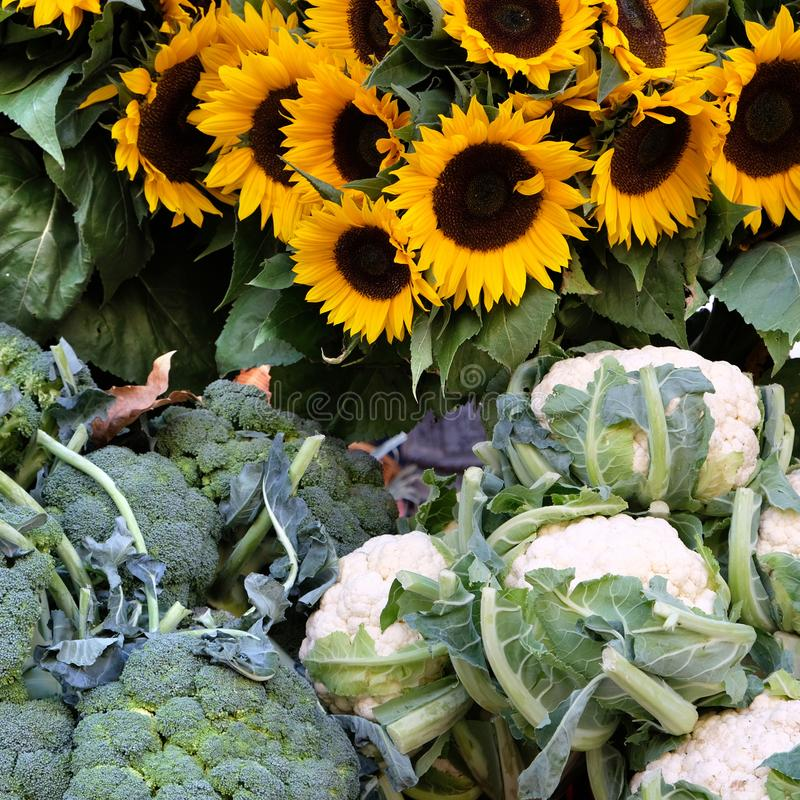 Farmers market France vegetables sunflowers square format stock photography