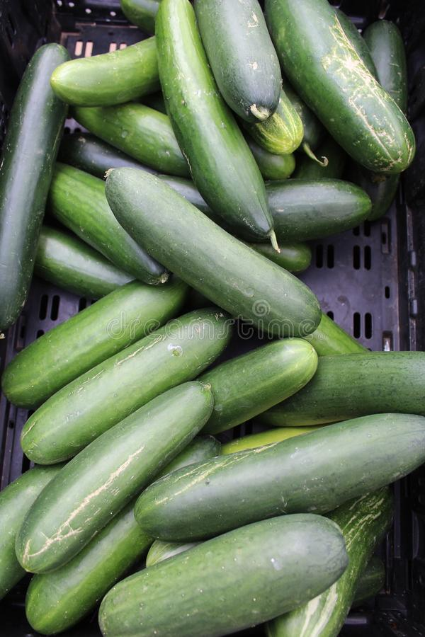 Farmers Market at Old Downtown Scottsdale, Arizona, United States. Cucumbers at the Farmers Market at Old Downtown Scottsdale, Arizona, United States stock images