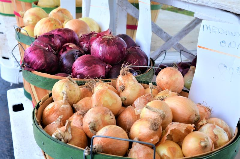 Farmers Market Onions Vegetables in Baskets royalty free stock photography