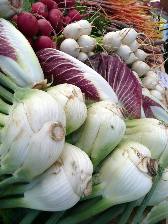 Farmers Market vegetables: fennel royalty free stock photography