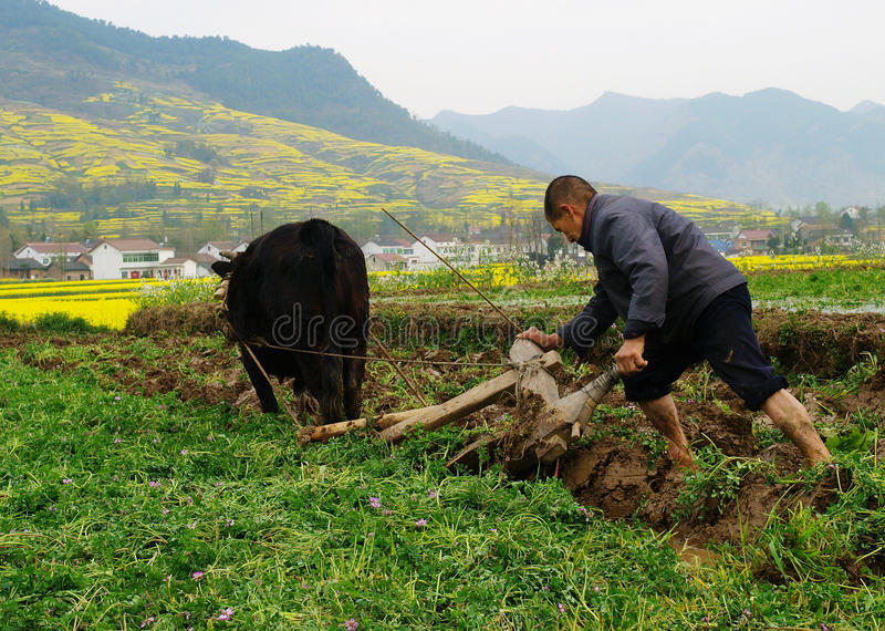 Download The Farmers Plough Their Fields In Stock Photo - Image of weeds, plowing: 24536362