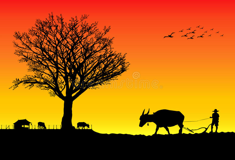 Farmers. Are plowing with buffalo and planting rice in the farm at sunset vector illustration