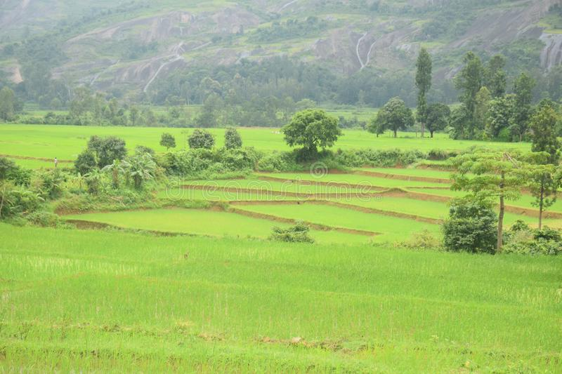 Beautiful of Field location in Andhrapradesh. Farmers agricultural managers typically work outdoors, but may spend some time in offices. They often do strenuous royalty free stock photos