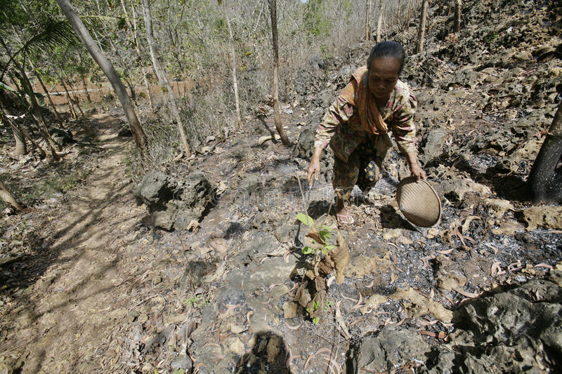 Farmers seek burning twigs as a raw material to boil water and c. Ook food in the area of Central Java Wonogiri district Paranggupito indonesia.musim drought stock photos