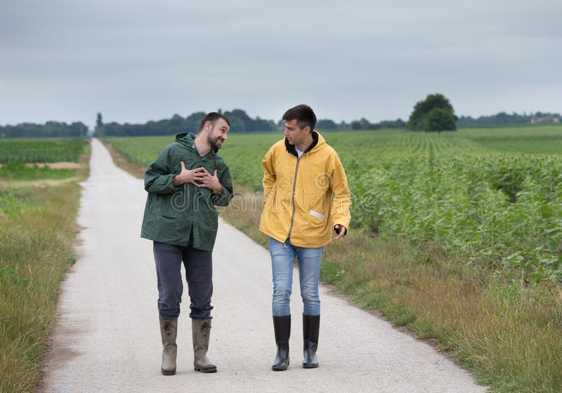 Farmers walking on country road. Two funny farmers walking on country road beside corn field in spring stock images