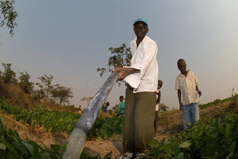 Download Farmers Watering Crops In Zimbabwe Editorial Stock Image - Image: 7883724