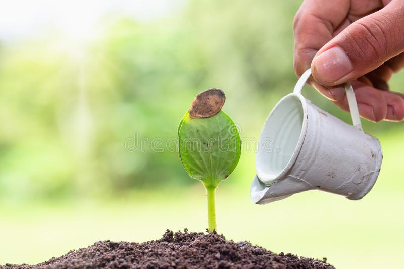 Farmers watering small seedlings, Seedlings are growing from abundant soil. Environment concept in earth day.  royalty free stock images