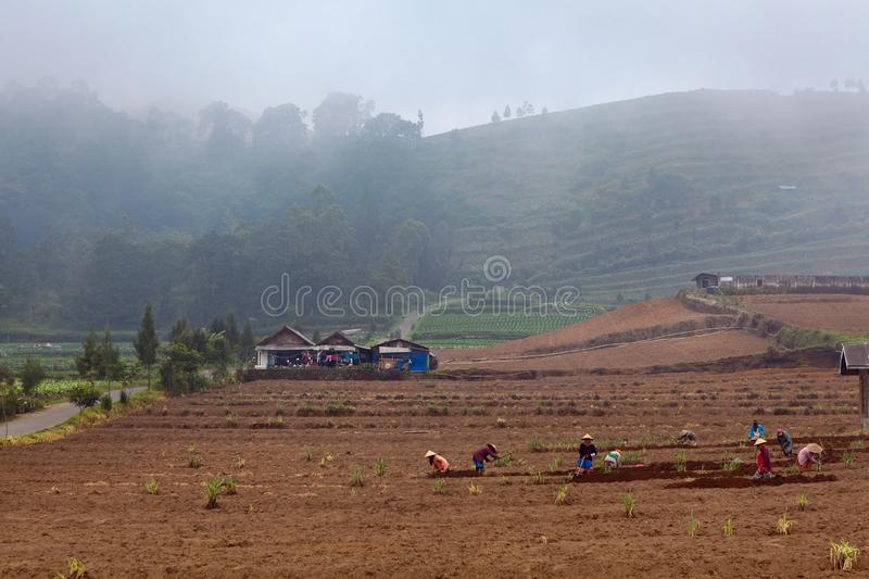 Farmers work in field digging up soil for vegetable garden royalty free stock photography
