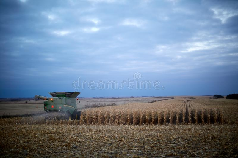 Farmers working late into the evening harvesting stock photo