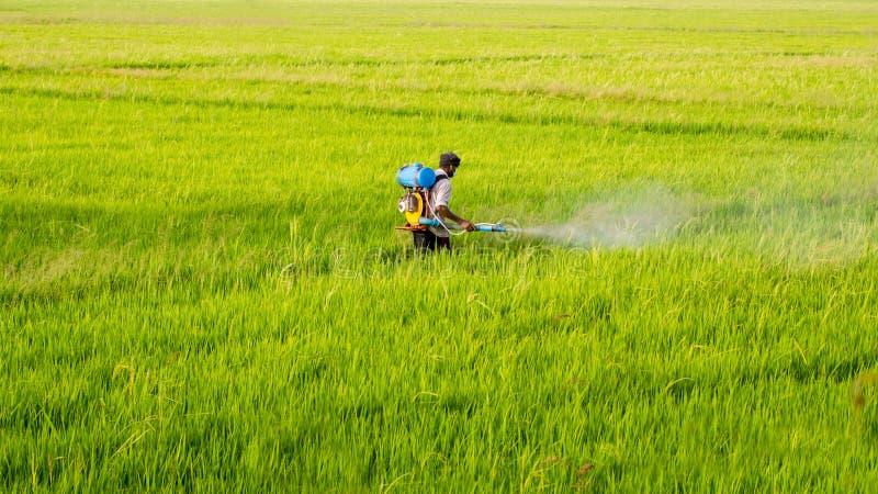FarmerSpraying pestycyd obrazy royalty free