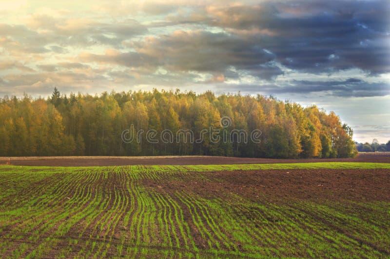 Farmfield i las w tle, Lithuania fotografia royalty free