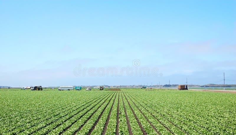Download Farming stock photo. Image of farmer, farmland, lettuce - 13595524