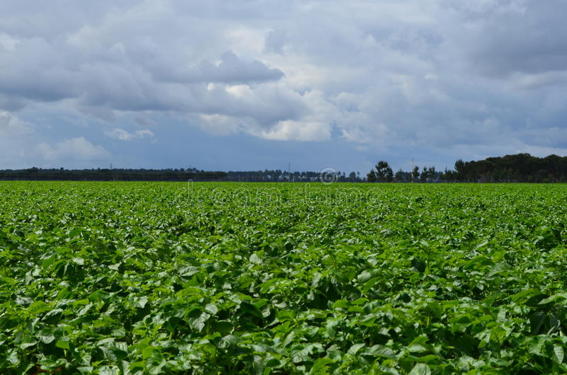 Download Farming stock photo. Image of irrigation, system, green - 24541826