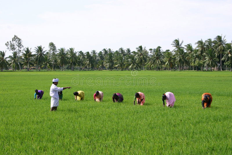 Farming royalty free stock photography