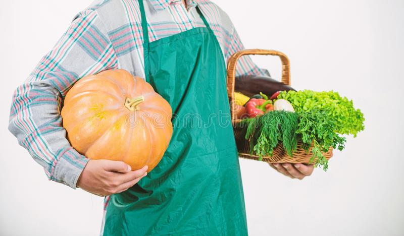 Farming and agriculture. Farmer wear apron hold pumpkin white background. Agriculture concept. Locally grown foods. Farmer guy carry big pumpkin. Local farm royalty free stock image