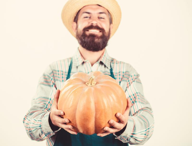 Farming and agriculture. Farmer wear apron hold pumpkin white background. Agriculture concept. Farmer guy carry big stock image