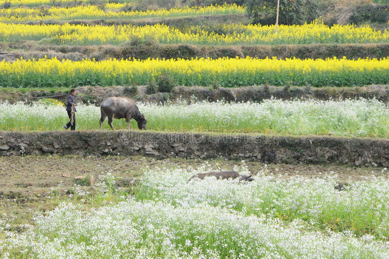 Farming at China royalty free stock images
