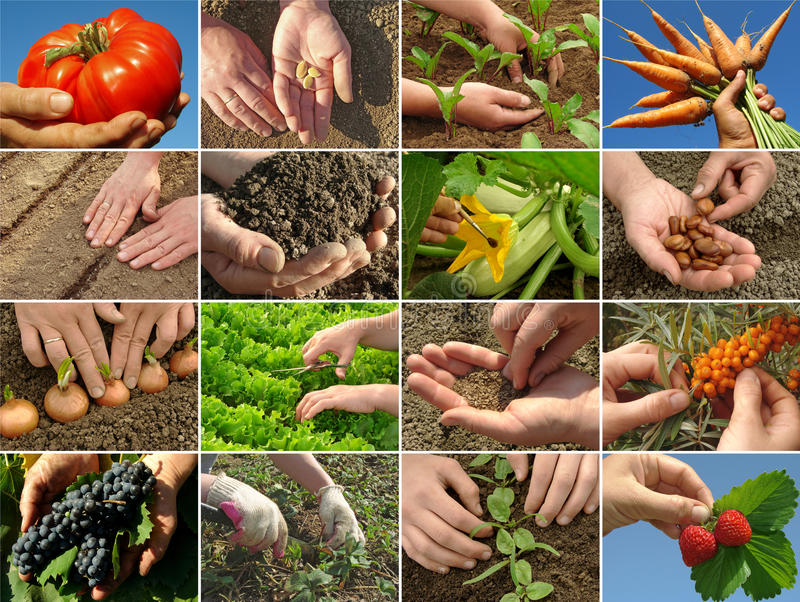 Farming collage stock image
