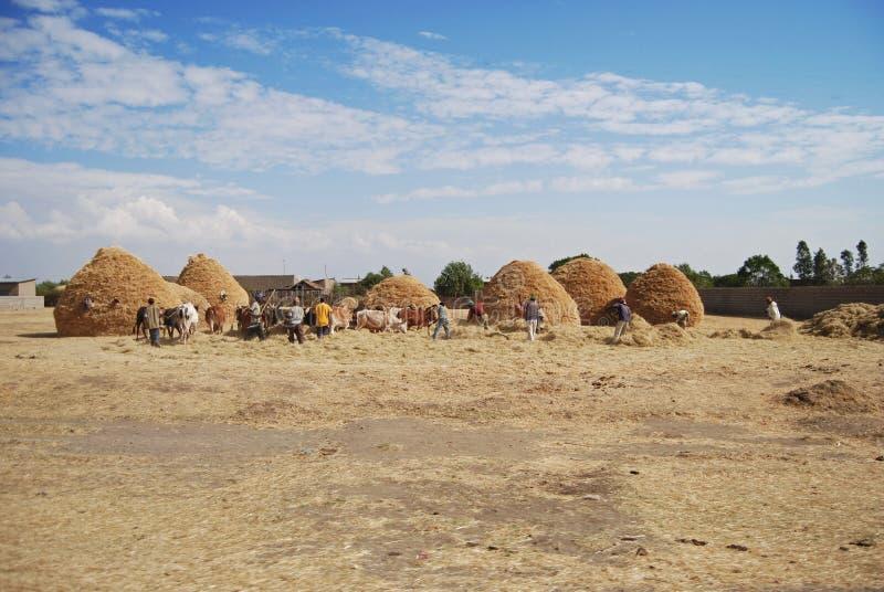 Farming in ethiopia royalty free stock image