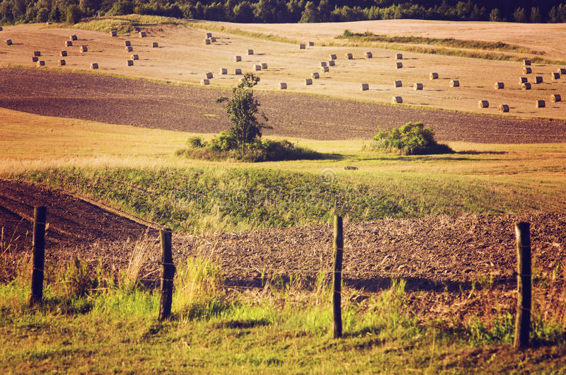 Farming fields in countryside summer landscape, Poland. royalty free stock image