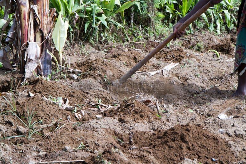 Farming fields in africa. Farming fields near arusha in tanzania, woman digging earth royalty free stock photos