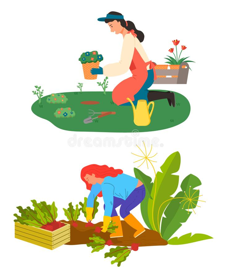 Farming and Gardening Hobby, Flowers and Beetroot. Woman caring for flowers vector, isolated people on plantation. Harvesting farmer with beetroots and container royalty free illustration