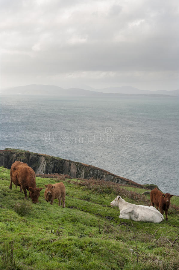 Free Farming In West Cork Stock Image - 56634211