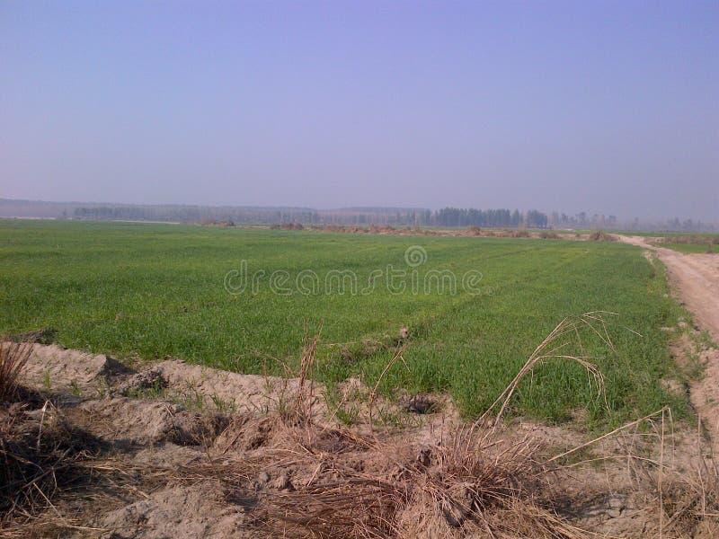 FARMING IN KARNAL ORGANIC. ORGANIC FARMING FARM IN KARNAL FOOD IS LIFE AND FUTURE BANKS OF RIVER YAMUNA stock photography