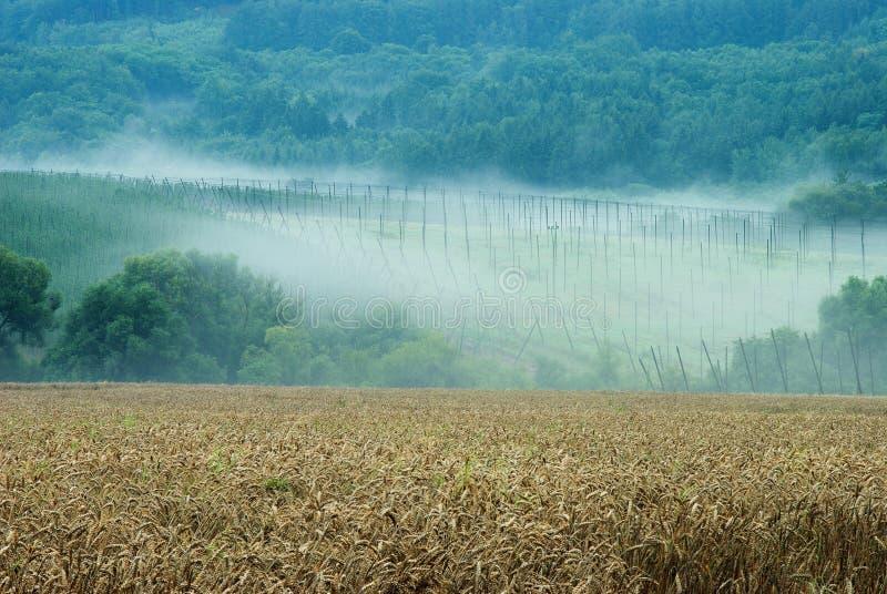 Download Farming landscape stock photo. Image of fertile, crop - 16197020