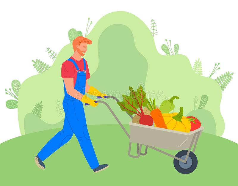 Farmer Using Carriage to Transport Vegetables. Farming man with cart vector, character wearing uniform pushing trolley with vegetables. Carrots and beetroots vector illustration