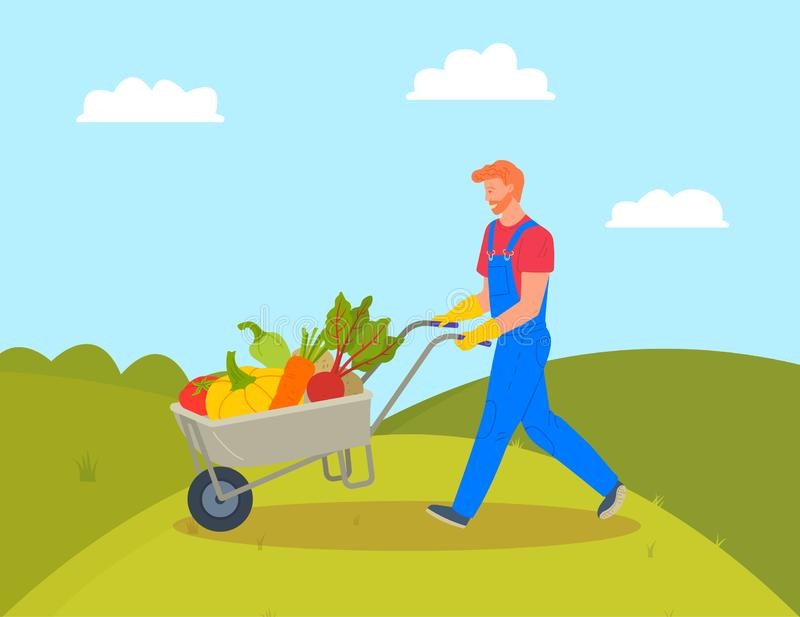 Farming Man with Trolley Loaded with Pumpkins. Pumpkins and beetroots, paprika and carrots in cart vector, farming man working on field. Hills and greenery vector illustration