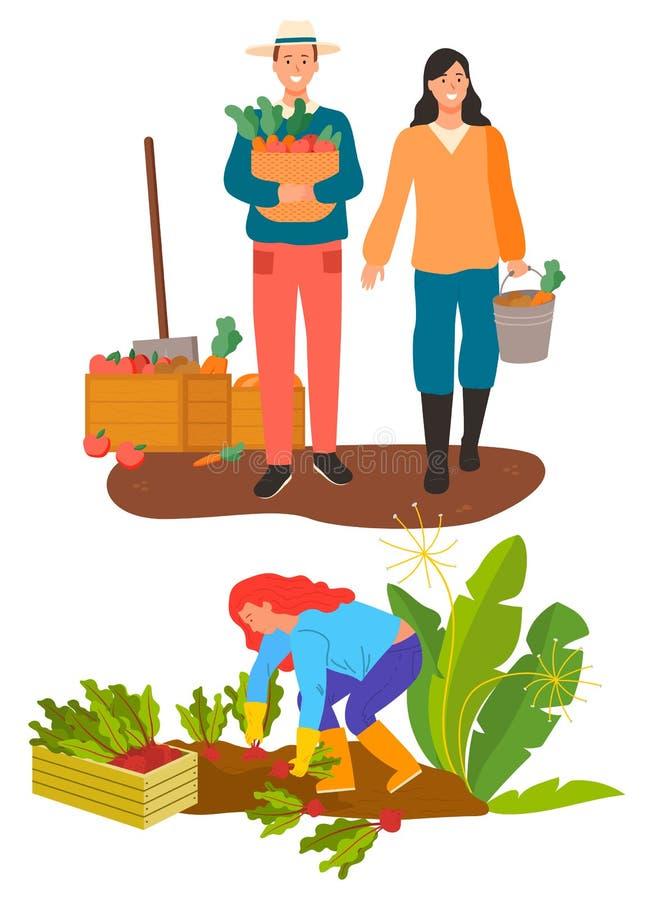Farming Man and Woman, Harvesting on Farm Vector. Farming people vector, isolated farmer man and woman on plantation. Season of harvesting soil maintenance and stock illustration