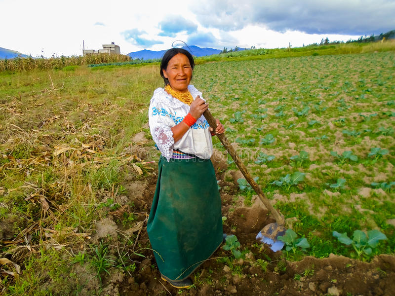 Farming in Otavalo, Ecuador. Unidentified woman working on a field in Otavalo, Ecuador. Otavalo was an area made up principally of farming communities due to the royalty free stock photo