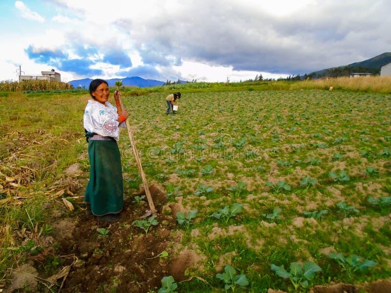 Farming in Otavalo, Ecuador. Unidentified woman working on a field in Otavalo, Ecuador. Otavalo was an area made up principally of farming communities due to the royalty free stock photos