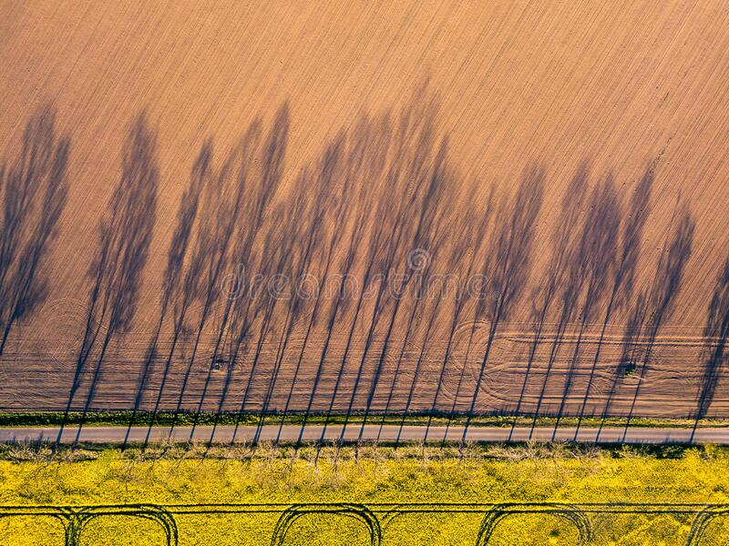 Farming. Shadow of trees. Aerial photography royalty free stock photo