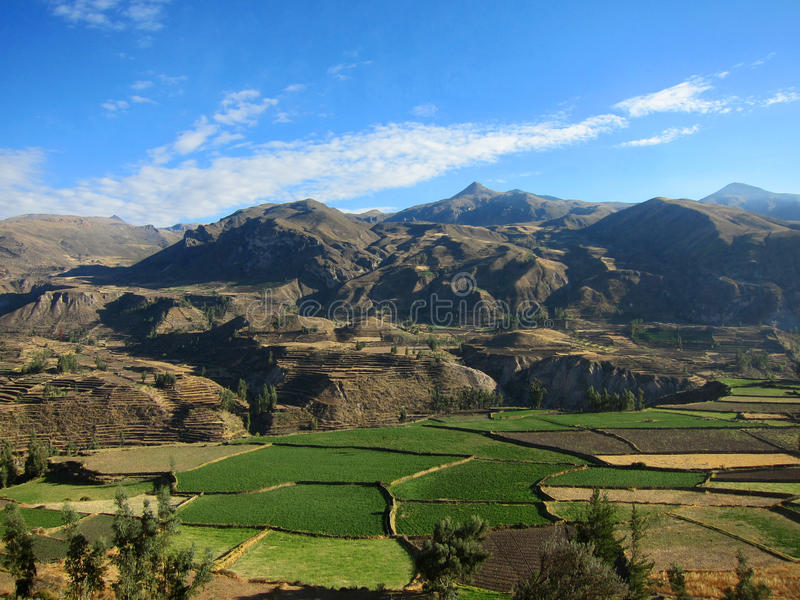Download Farming terraces in Peru stock photo. Image of layer - 21835178