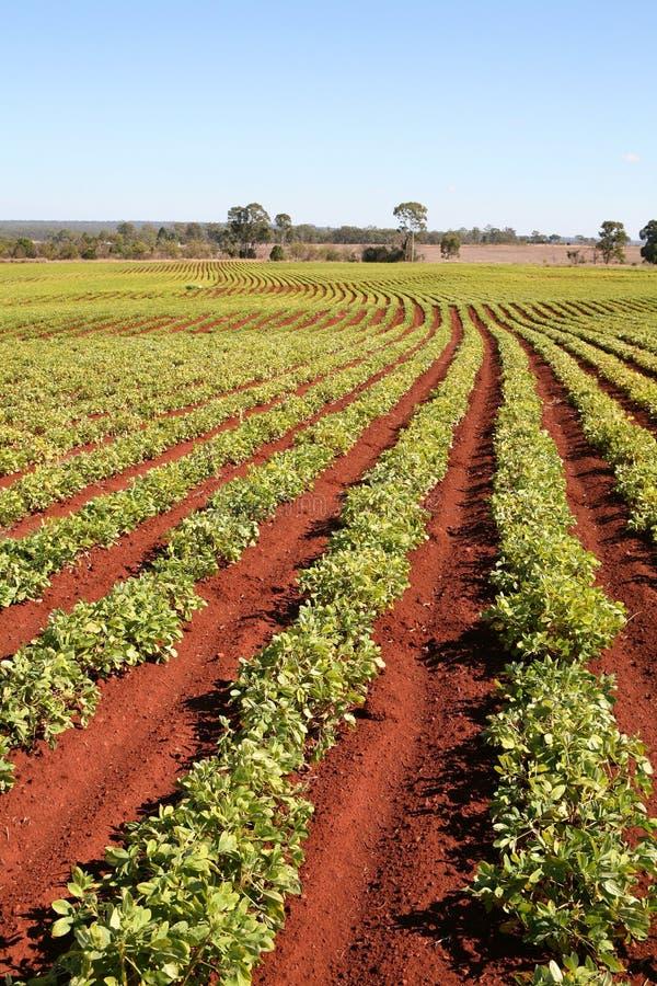 Farming Today stock photos
