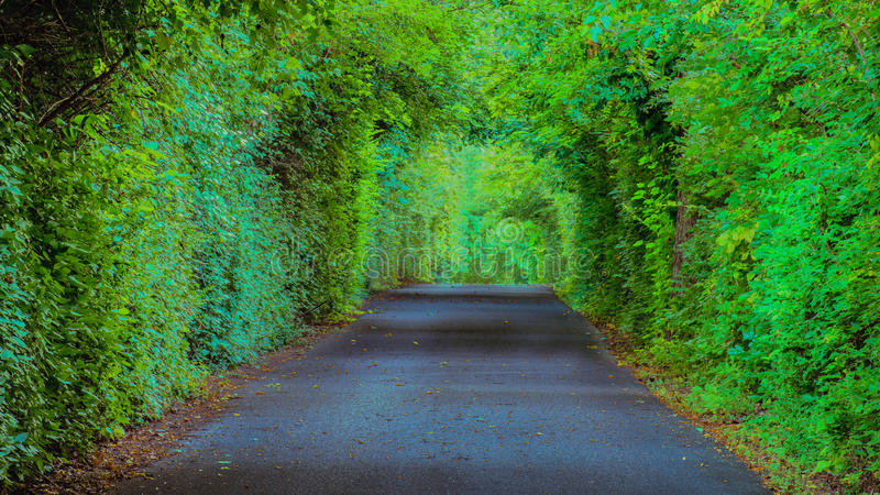 Farmington-Plantagen-bewaldeter Weg, Louisville Kentucky lizenzfreie stockfotografie