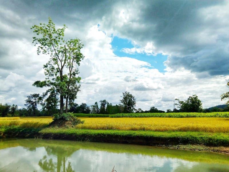 Farmland immagini stock libere da diritti