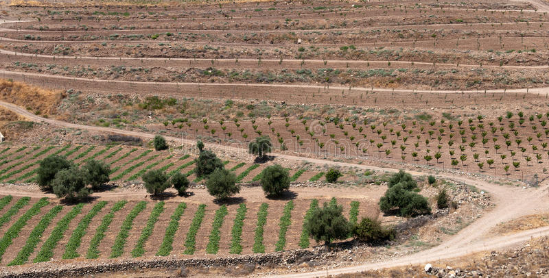Download Farmland Paphos Cyprus stock photo. Image of fields, paphos - 22089124