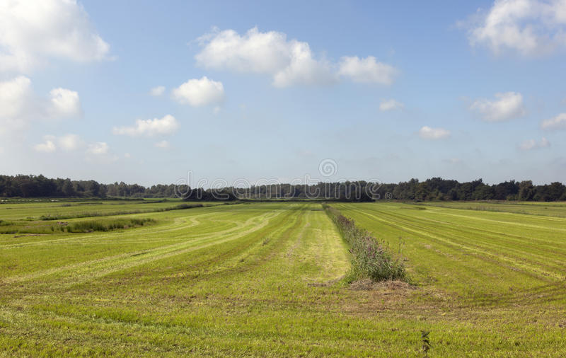Download Farmland stock image. Image of country, non, meadow, bright - 28082203
